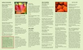 Brochures & Page Layout