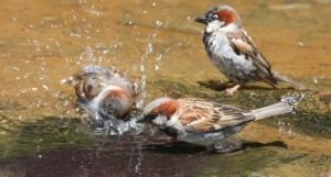 spin.splash.birds_.iStock_000005865023XSmall